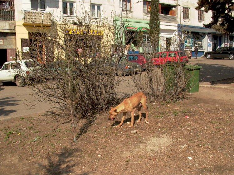 პოლიციელის დღე საქართველოში